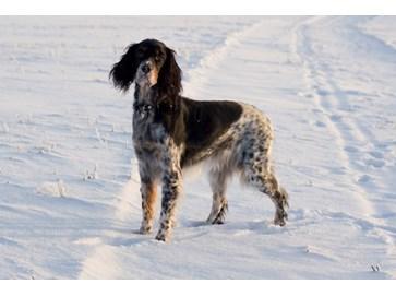 Ypperlig Gjør hunden vinterklar XJ-56