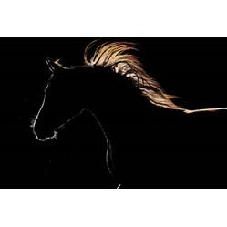 Webinar: Hvordan fôre hesten før og etter konkurranser bilde