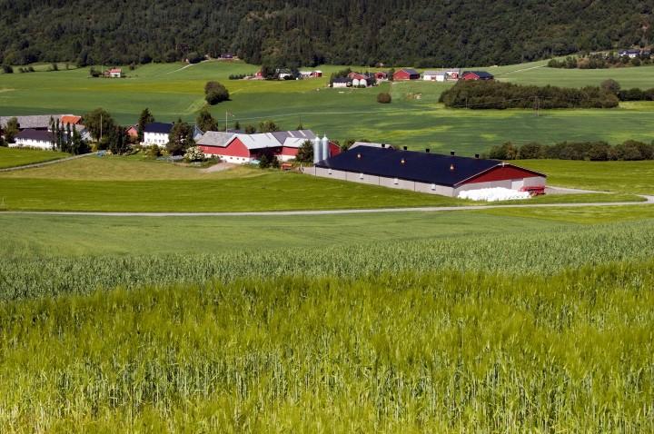 finn landbruk