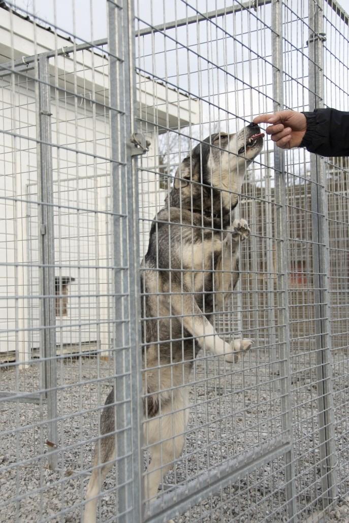 Fasjonable Felleskjøpet nettbutikk - Dørelement til hundegård WP-66